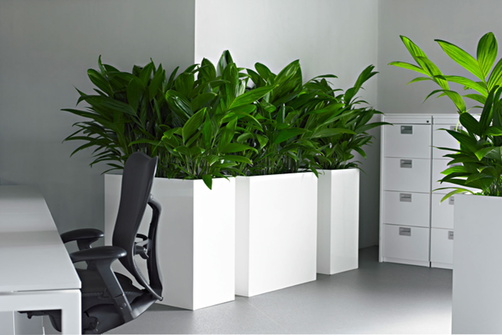 Plants from Luwasa greenstyling for the office and reception desk, subscription and leasing